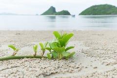 Árvore pequena na praia Fotografia de Stock Royalty Free