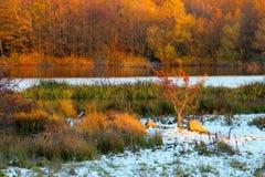 Árvore pequena pelas costas do lago imagem de stock royalty free