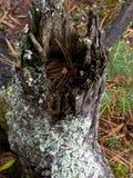 Árvore pequena que cresce o coto interno Imagem de Stock Royalty Free