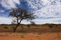 Árvore perfeita Fotografia de Stock Royalty Free