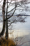 Árvore perto da água Imagens de Stock Royalty Free