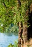 Árvore perto da água Fotografia de Stock Royalty Free