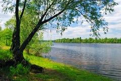 Árvore perto da água do rio Fotos de Stock Royalty Free
