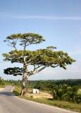 Árvore perto da estrada Fotos de Stock Royalty Free