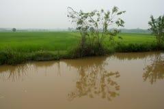 Árvore perto do canal Imagem de Stock Royalty Free