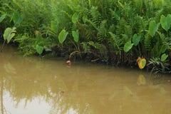Árvore perto do canal Imagens de Stock