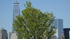 Árvore perto do Lower Manhattan imagens de stock royalty free