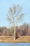 Árvore perto do rio de Dnieper no outono fotografia de stock