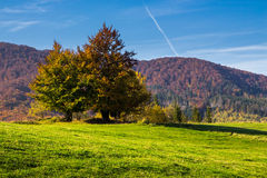 Árvore perto do vale nas montanhas Fotografia de Stock Royalty Free