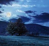 Árvore perto do vale nas montanhas na noite Fotografia de Stock