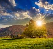 Árvore perto do vale nas montanhas no por do sol Fotos de Stock