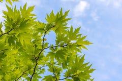 Árvore plana imagens de stock