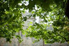 Árvore plana Fotografia de Stock