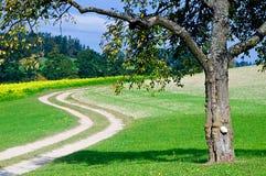 Árvore por um caminho curvado Fotos de Stock Royalty Free