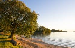 Árvore por uma praia Fotos de Stock Royalty Free