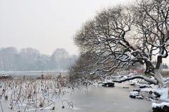 Árvore próximo o lago da neve Imagens de Stock Royalty Free