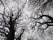 Árvore preta austero do inverno e dossel de floresta com ramos torcidos Fotografia de Stock Royalty Free