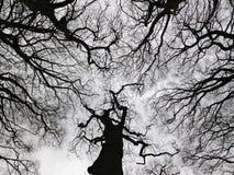 Árvore preta austero do inverno e dossel de floresta com ramos torcidos Fotografia de Stock