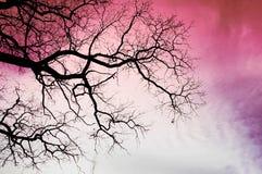 Árvore preta em um fundo cor-de-rosa do céu foto de stock royalty free