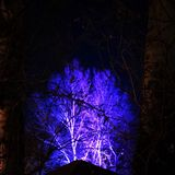 Árvore preta roxa fotografia de stock royalty free
