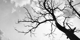 Árvore preto e branco imagens de stock