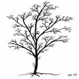 Árvore preto e branco Imagem de Stock Royalty Free
