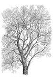 Árvore preto e branco ilustração stock