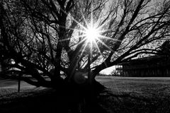 Árvore preto e branco com alargamento de Sun fotos de stock royalty free