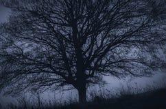 Árvore que cobre o céu Foto de Stock Royalty Free
