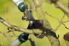Árvore que corta 15 Fotografia de Stock Royalty Free