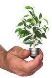 Árvore que cresce da base da ampola à disposicão Foto de Stock Royalty Free