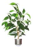 Árvore que cresce da base da ampola Foto de Stock Royalty Free