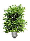 Árvore que cresce da base da ampola Imagem de Stock