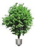 Árvore que cresce da base da ampola Foto de Stock