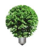Árvore que cresce da base da ampola Imagens de Stock Royalty Free