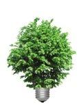 Árvore que cresce da base da ampola Fotos de Stock Royalty Free