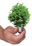 Árvore que cresce da base da ampola Fotos de Stock
