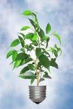 Árvore que cresce da base de encontro ao céu Foto de Stock Royalty Free