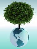 Árvore que cresce de um globo Imagem de Stock