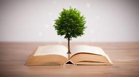 Árvore que cresce de um livro aberto Imagens de Stock