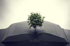 Árvore que cresce de um livro aberto Educação, imaginação, faculdade criadora fotografia de stock