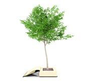 Árvore que cresce do livro velho Crescimento do conhecimento do conceito da educação Imagem de Stock