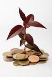 Árvore que cresce em moedas fotos de stock