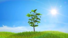 Árvore que cresce em um monte verde com o fundo de Sun e de nuvens ilustração do vetor
