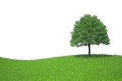 Árvore que cresce em um prado verde isolado em b branco Imagem de Stock