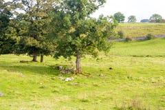 Árvore que cresce fora das rochas Imagens de Stock Royalty Free