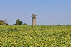 Árvore que cresce fora de um silo concreto velho fotografia de stock