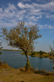 Árvore que cresce na costa do lago fotografia de stock royalty free