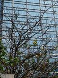 Árvore que cresce na frente da parede de vidro do arranha-céus em Hong Kong Fotos de Stock Royalty Free