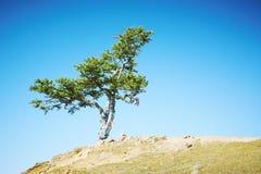 Árvore que cresce na parte superior da montanha Imagens de Stock
